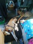 20180803 (13) dogs in van.jpg