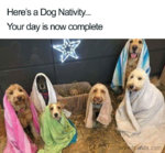 doggy christmas.jpg